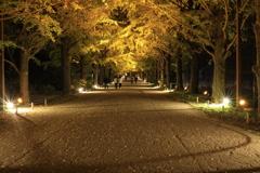 秋の夜散歩 かたらいのイチョウ並木にて