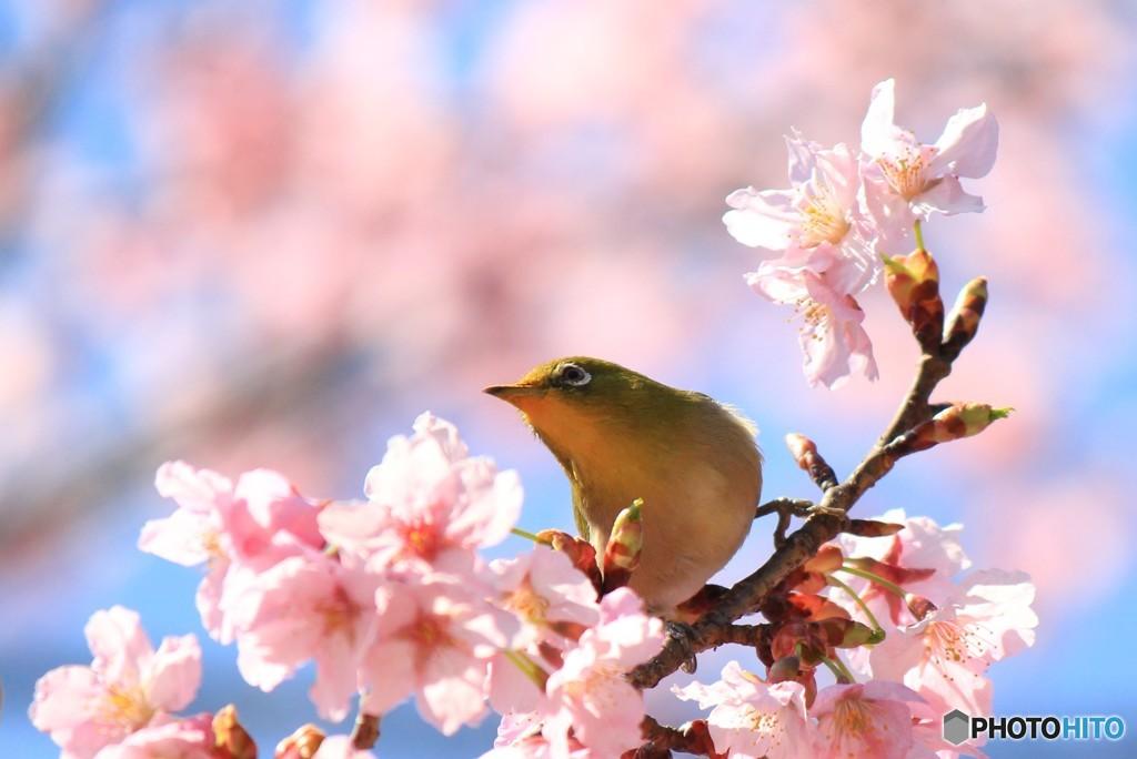 春色に遊ぶ