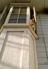 見張台~シロ