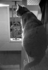 もうすぐ3歳・・・8.8kg~トラ