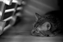 スノコ猫2〜トラ