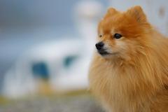 中禅寺湖の狛犬