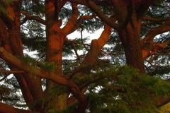 夕方の木々