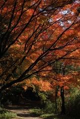 紅葉の抜け道。
