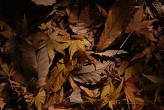 静かな秋。