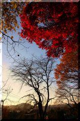晩秋の里1