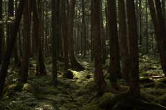 白駒池散策03