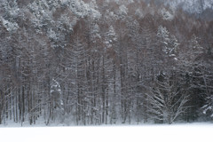 御射鹿池・冬