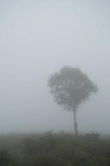 霧、霧、霧、、、、