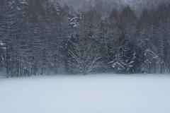 凍れる世界