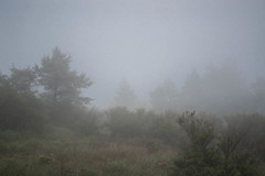 秋冷に霞む湿原