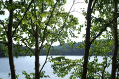 白駒池散策10