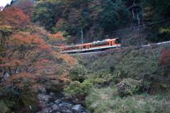 紅葉列車でGo!