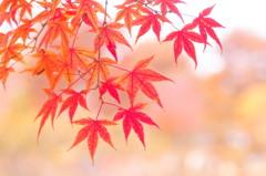 爽やかな秋