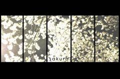 sakura-byobu