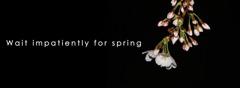 春を待ち侘びて(take1)