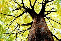 秋の広がり