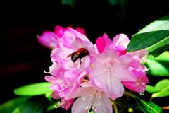石楠花と蜂