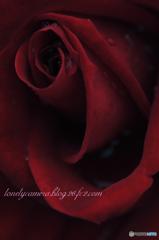 May Red (再掲)