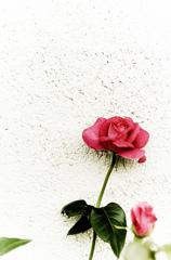 壁に咲いた夢