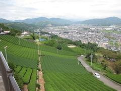 茶畑から望む街