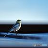 野山の鳥写真集