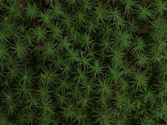 ミニミニ針葉樹林