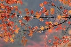 雨の香嵐渓の朝④
