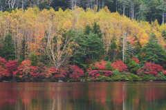 池畔の彩り