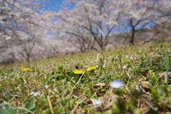 足元にも春