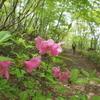 ツツジ咲く山道