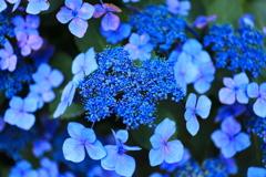 青に染まる