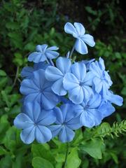 キーウェスト ヘミングウェィの家に咲いてた花