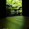 四季京艶 新緑の社寺を