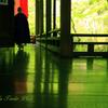 四季京艶 薫緑の候 床もみじ 壱