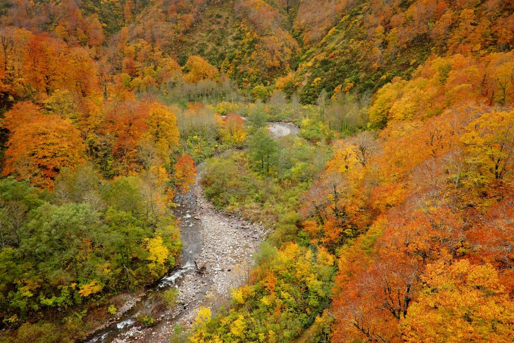 岩手胆沢川の紅葉