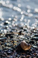 まどろみの貝殻