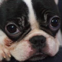 Family dog Mignon