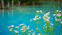青い池と白い花