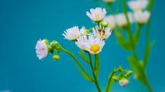 青い池と白い花と小さな蝿