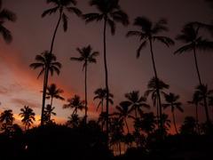 palm @kuai hawaii