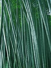 Bamboo@kamakura