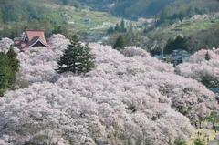 桜雲に浮かぶ高遠閣