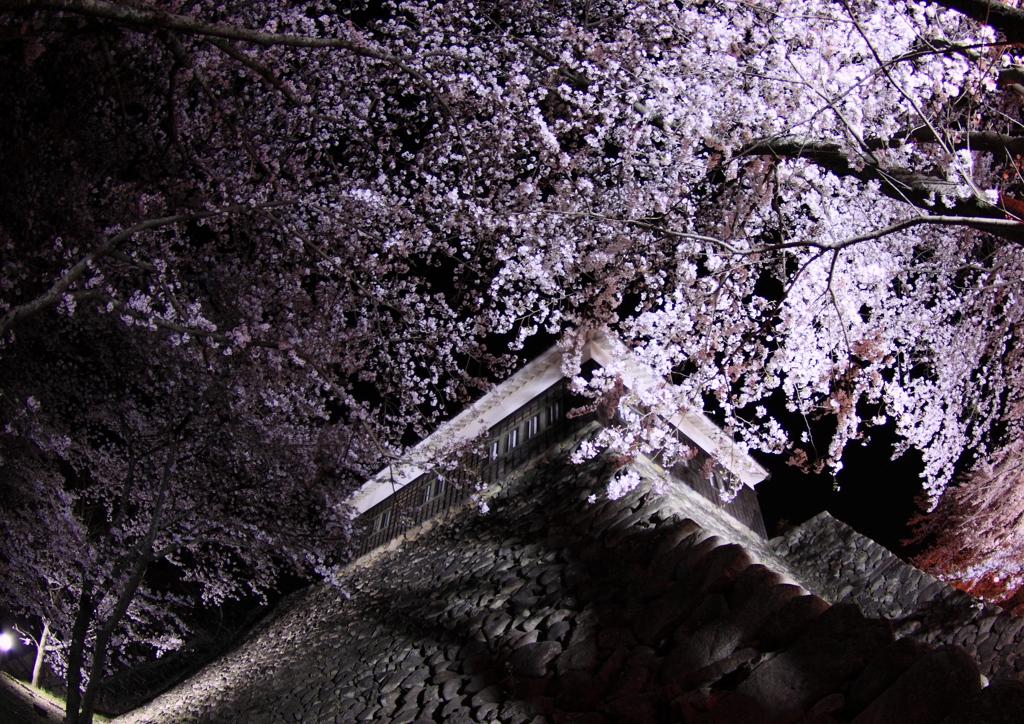 亀山城跡 in 桜
