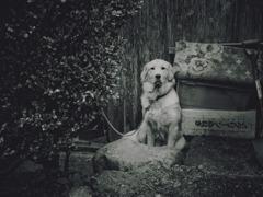 犬の人生 その1