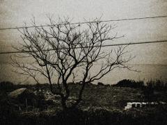 充電する樹