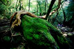 屋久島の森