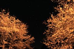 夜桜と七つの星