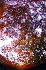染まり行く紅葉