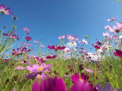 花の楽園!